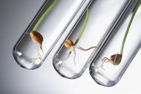 germinate: germinate seed in test tube