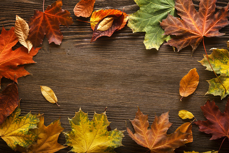 autumn leaf on wood black background Stock Photo