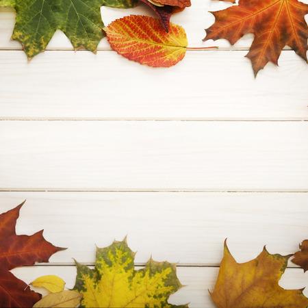 autumn leaf on wood background