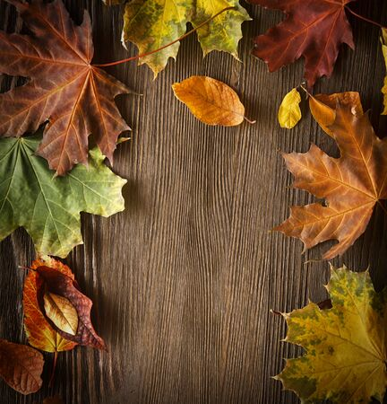 fall of the leaves: autumn leaf on wood black background Stock Photo