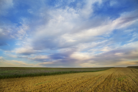 idealistic: idealistic summer landscape with grass