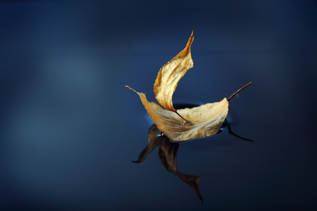 sail: leaf ship in blue water