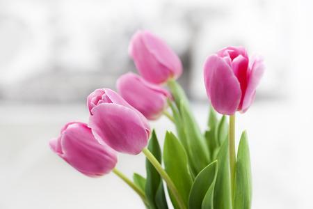 tulip: pink tulip in white room