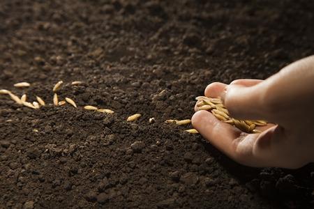 siembra: Mujer de semillas de siembra weat mano