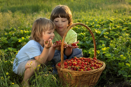 adorable child: two cheerful boy with basket of berries Stock Photo