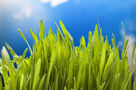 non urban scene: the green grass on sky background