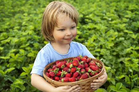 6 7 years: cheerful boy with basket of berries