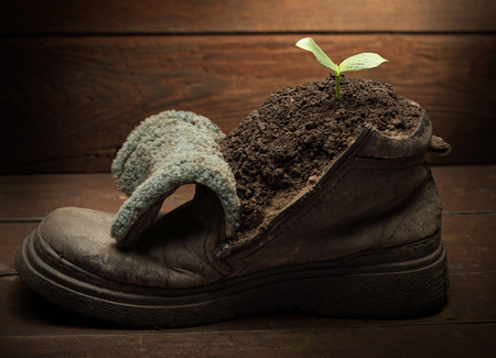 vintage objects: green sprout in grunge boot