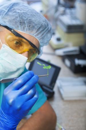 diseased: scientist holding diseased plant (focus on plant)