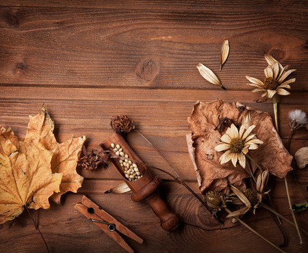 dried: autumn background with fruits and spices with dried flowers place for inscription
