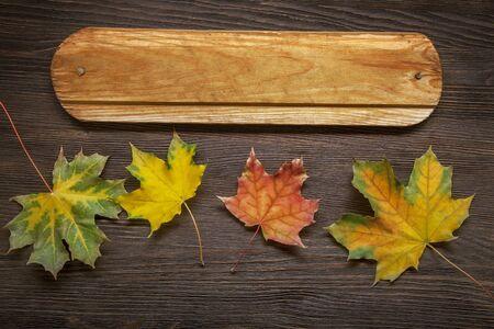 feuille arbre: automne classé sur l'arbre avec le cadre de la feuille pour les mots et inscriptions, copie espace, (vue de dessus)
