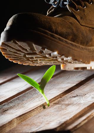 bionomics: Rough boots crush delicate flower