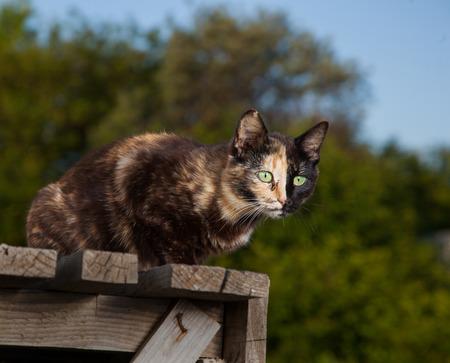 Tortoiseshell cat outdoors