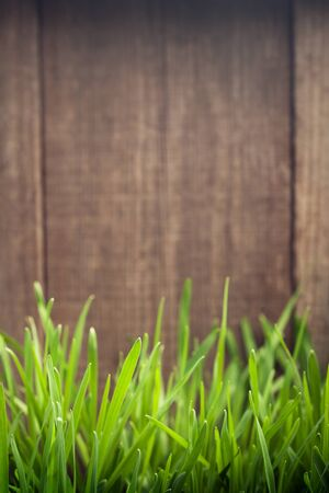 wood grass: Grass on the background of wood planks, Fresh green lawn near rustic grunge fence Stock Photo