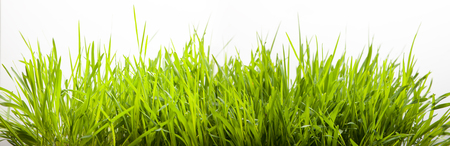 lawns: green grass for lawn gresh isolate on white Stock Photo