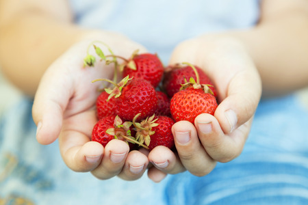 food basket: handful of strawberries in the hands of the boy
