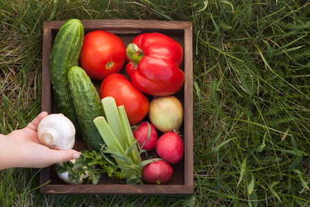 Vegetables in a box for lettuce on the grass in the summer garden, a childs hand puts a mushroom