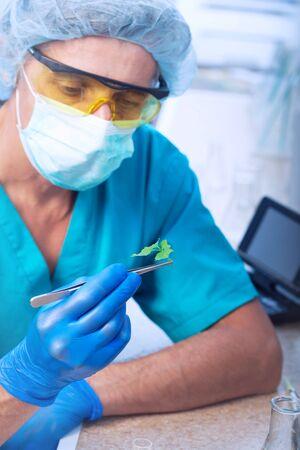 scientist holding diseased plant (focus on plant) photo