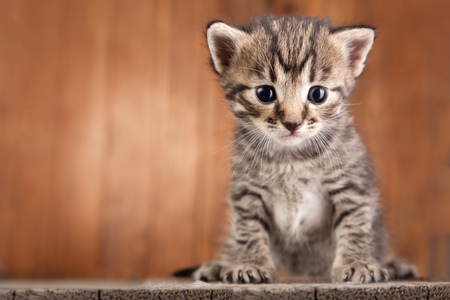 small kitten on background of old wooden boards.