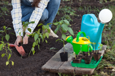 Girl in the garden makes planting seeds Stock Photo