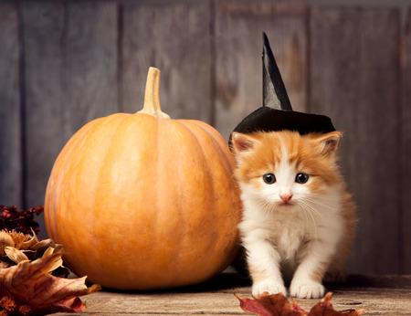 halloween pumpkin jack-o-lantern and ginger kitten on black wood background. Stock Photo