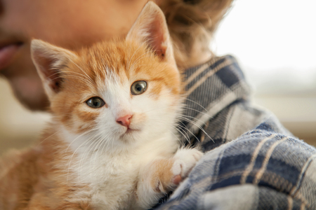 kitten on the shoulder of the boy outdoors.
