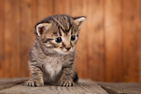 small tabby kitten on background of old wooden boards. Stock Photo