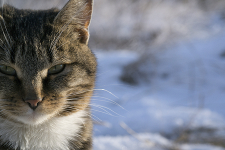 cat in the snow in the winter