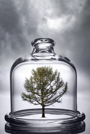 tree growing under a glass dome on cloud background. Environmental conservation concept.