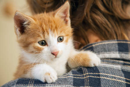 kitten on the arm of the boy outdoors, child huge his love pet Stock Photo