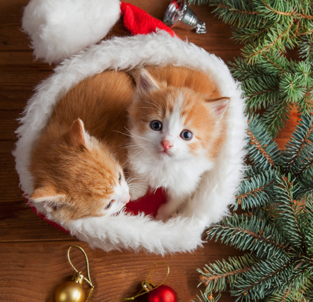 ginger kitten in santa hat against the background of a Christmas tree