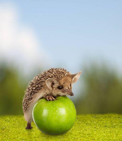 little hedgehog on green apple on nature background