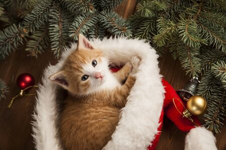 Kitten in santa hat on Christmas background and fur tree Stock Photo