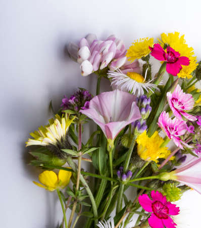 Wild flowers bouquet on blue background.