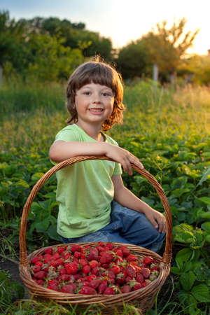 cheerful boy with basket of berries in the summer green nature background