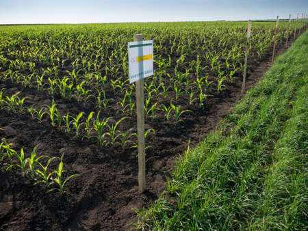 Paper signboard on agricultural land with young sprouts, field with nameplate Plant nametag-board, concept of eco farm.