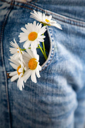 White Chamomile flower in the pocket of a summer jeans trousers