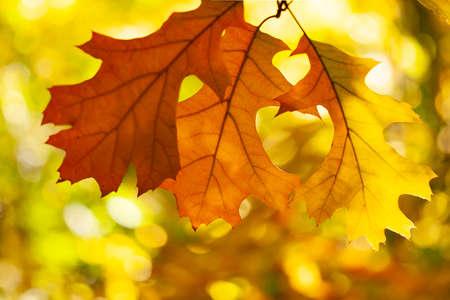 Idyllic Autumn Scene, Falling leaves