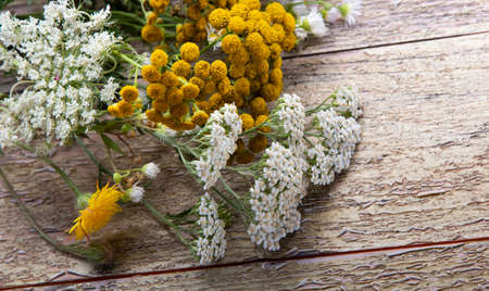 White flowering umbels and buds of wild carrot and tansy on wood background. (Daucus carota, Tanacetum) Standard-Bild