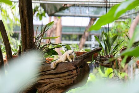 orchid house: A white squrriel in orchid house
