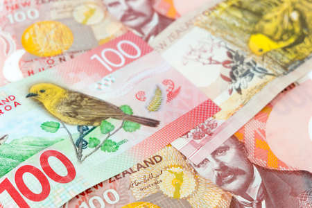 New Zealand currency, Many of one hundred New Zealand dallar banknotes as money background.