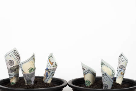 Planting US Dollars in black flower pot isolated on white background. Money tree growth up from ground in concept of financial and investment. 版權商用圖片