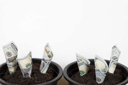 Planting US Dollars in black flower pot isolated on white background. Money tree growth up from ground in concept of financial and investment. 스톡 콘텐츠
