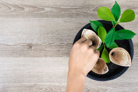 Planting Euro money and plant in black flower pot placed on wooden table with hand picking money in concept of financial planning, saving money, interest, investment and money growth with copy space. Banque d'images