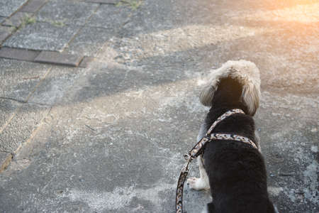 Black dog sitting on footpath with leash is waiting for walking outdoor.