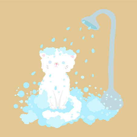 cat take a shower with bubble
