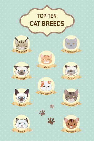 abyssinian: pastel top ten cat breeds poster