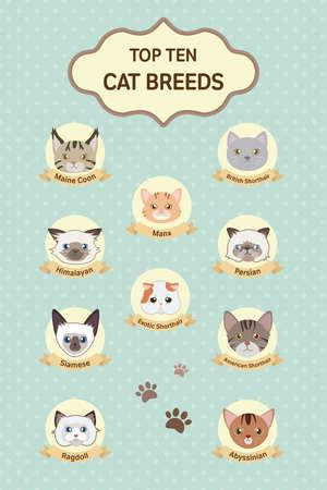 pastel top ten cat breeds poster