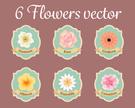 lilly: six pastel anemone rose hibiscus and water lilly flowers vector set Stock Photo