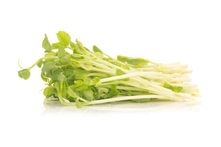 Pea Sprouts isolated on White Background.